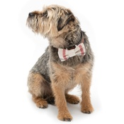 Mutts & Hounds - Nottingham Check Bow Tie