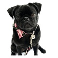 Collar, Bow Tie and Lead Set - Chelsea 2