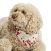 Pet Pooch Boutique - Cream Vintage Primrose Dog Bandana