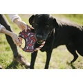 Scout & About Flying Disc Dog Toy 5