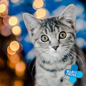 Make Christmas extra magical for your kitty with our festive gifts