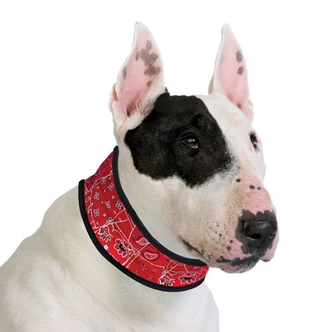 Dog Cooling Collar in Red Western 2
