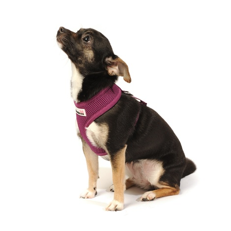 Airmesh Dog Harness – Purple 5