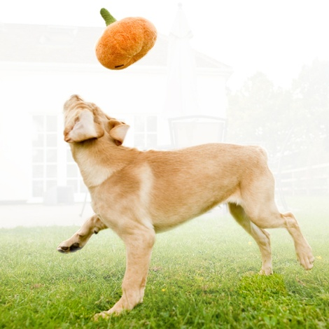 Plush Dog Toy - Pumpkin 4