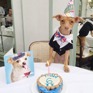 We help celebrate Instagram dog Tuna's birthday