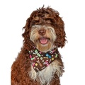 Woof Woof Dog Bandana 3