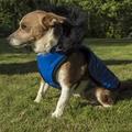 Brighton Bubble Hoodie Dog Coat - Blue 4