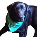 Shamrock Irish Dog Bandana - Black 2