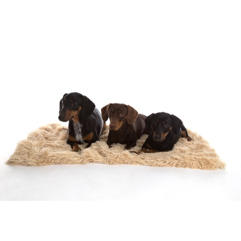 Shaggy Pet Blanket - Camel