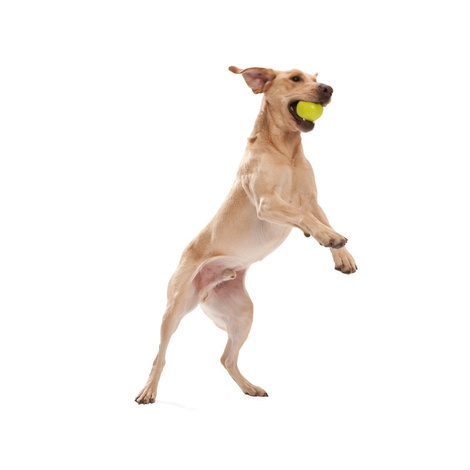 Zogoflex® Jive Dog Ball – Green 5