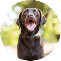 Labrador Insurance