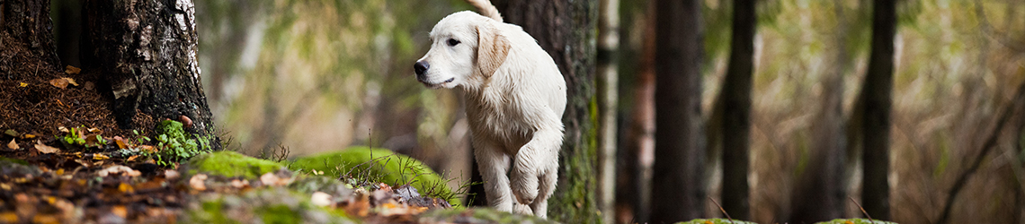 Dog-friendly Somerset Holidays