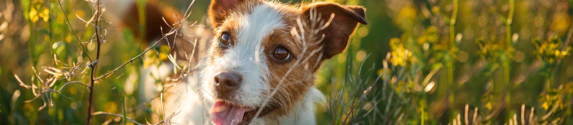 Dog-friendly West Yorkshire Holidays