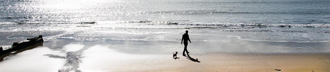 Dorset Dog-friendly Hotels