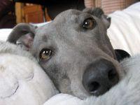 Rescue Dog Insurance