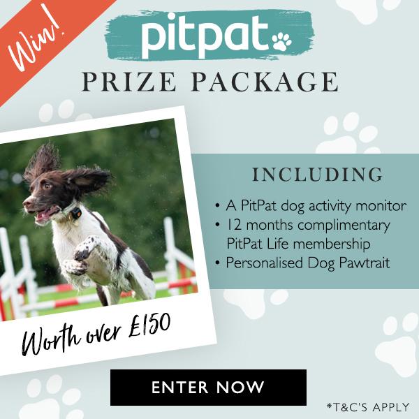 Dog-Friendly Holidays and Pet-Friendly Travel in UK   PetsPyjamas